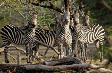 wyprawy-safari-i-wypoczynek-na-plaży-Tanzania-Siwandu-safari5