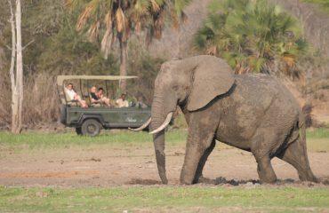 wyprawy-safari-i-wypoczynek-na-plaży-Tanzania-Siwandu-safari6
