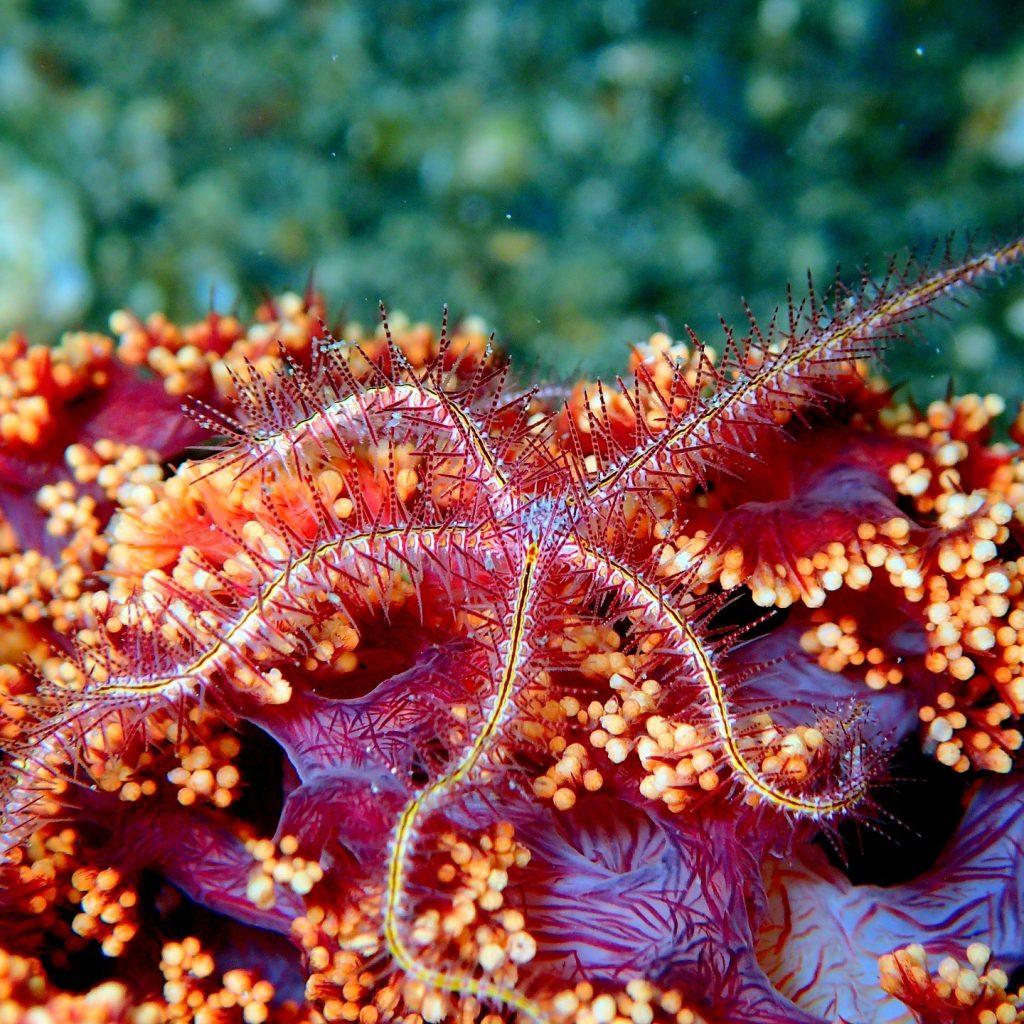 sea-star-starfish-2336889_1920