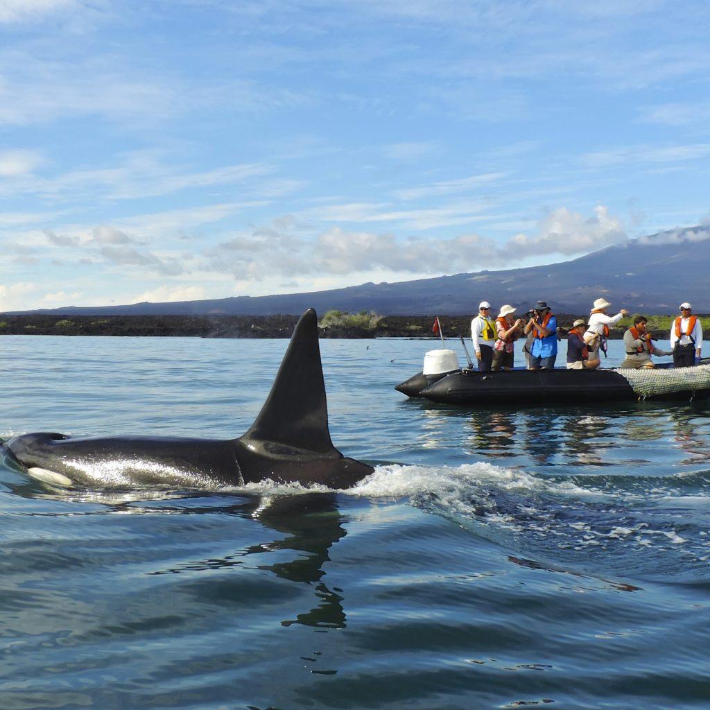 Paseo en panga Orca II Alta-1