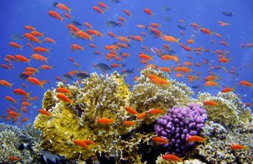 diving-694689