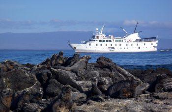 LP00005-Marine-iguana-la-pinta-view
