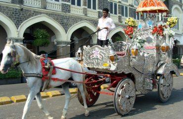 cart-609077