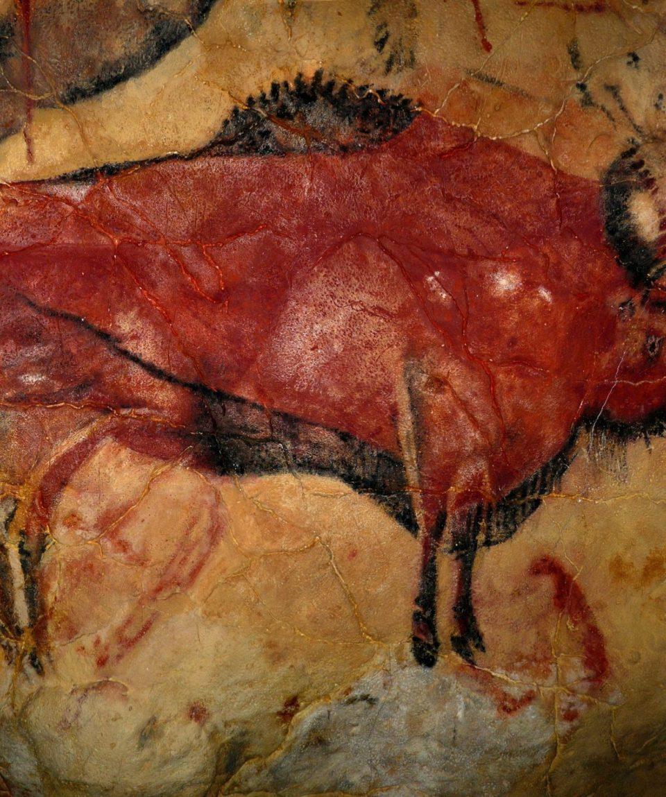 bison-1171794